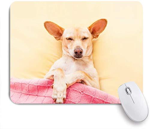 Dekoratives Gaming-Mauspad,Chihuahua Bequeme Hundekopfschmerzen Kater Schlafbett Tiere Wildtiere,Bürocomputer-Mausmatte mit rutschfester Gummibasis