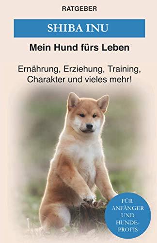 Shiba Inu: Erziehung, Training und Charakter von Shiba Inu