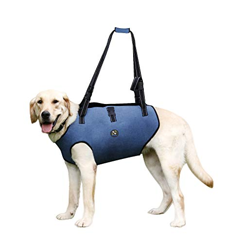 Coodeo Dog Lift Harness, Pet Support & Rehabilitation Sling Lift Adjustable Padded Breathable Straps for Old, Disabled, Joint Injuries, Arthritis, Loss of Stability Dogs Walk (XXLarge)