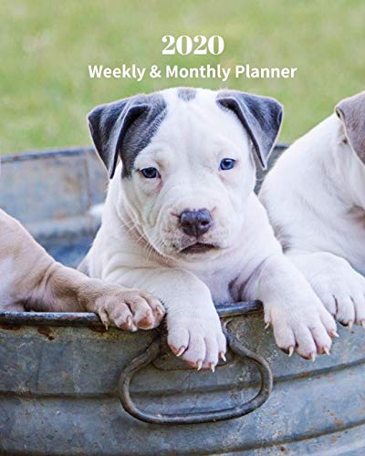 2020 Weekly and Monthly Planner: Pit Bull Pup - Monthly Calendar with U.S./UK/ Canadian/Christian/Jewish/Muslim Holidays– Calendar in Review/Notes 8 x 10 in.- Dog Breed Pets
