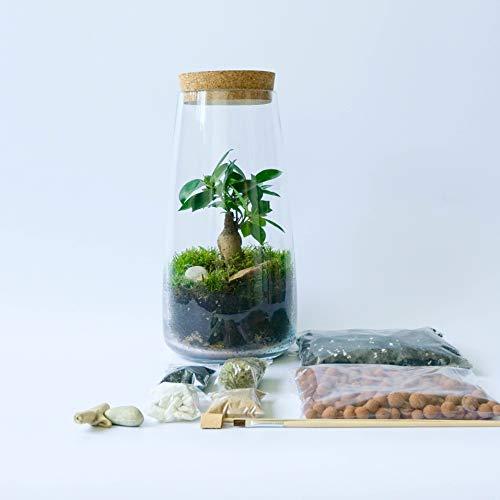 Concretelab&co Terrarien-Set, handgefertigt, durchsichtig, mit rundem Korkdeckel, Mini-Garten, mit optionaler Fittonia Moos, Bonsai, Farn, Gebetspflanze, 30 cm Höhe