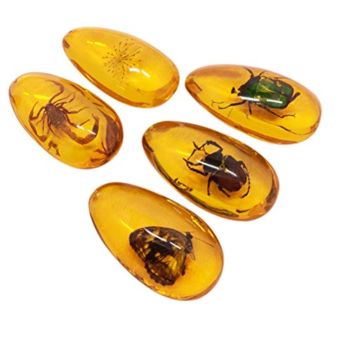 Amber Fossil with Insects Samples Stones Crystal Specimens Home Decorations Collection Oval Pendant(1PCS Random Pattern)