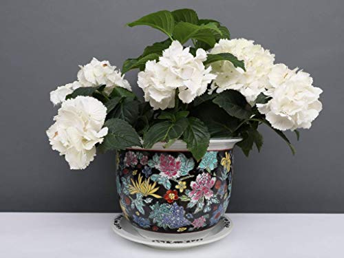 Yajutang Maceta de porcelana china, color negro con flores de colores, diámetro de 24 cm