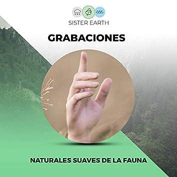 Grabaciones Naturales Suaves de la Fauna