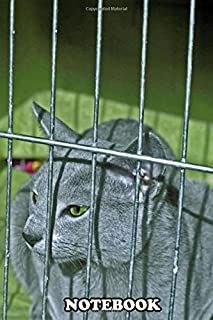 Notebook: Russian Blue Cat In Cage On Cat Show Wondering If We Ar , Journal for Writing, College Ruled Size 6