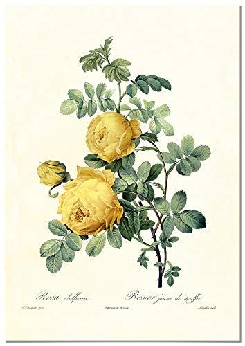 Panorama Póster Rosa Amarilla Vintage 21x30cm - Impreso en Papel 250gr - Láminas Hojas Verdes - Láminas para Enmarcar - Cuadros Decoración Salón - Cuadros Botánica - Cuadros de Plantas
