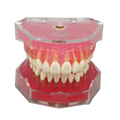 DENTAL TOOTH MODEL MODEL Removable Teeth Ship from USA,3-5 business days delivery.