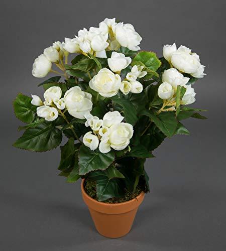 Seidenblumen Roß Begonie 38cm weiß im Topf LM Kunstpflanzen Kunstblumen künstliche Blumen Pflanzen Begonienbusch