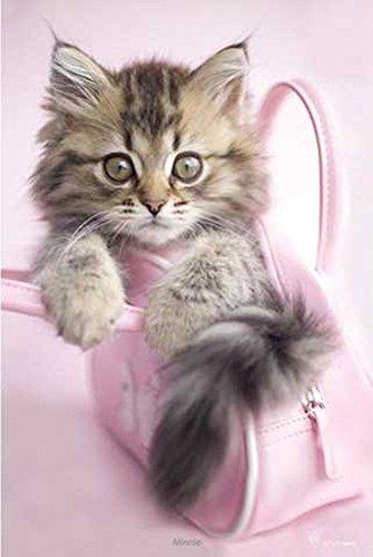Hale, Rachael - Minnie Katze - Poster Foto Katze in Handtasche - Grösse 61x91,5 cm + 1 Ü-Poster der Grösse 61x91,5cm