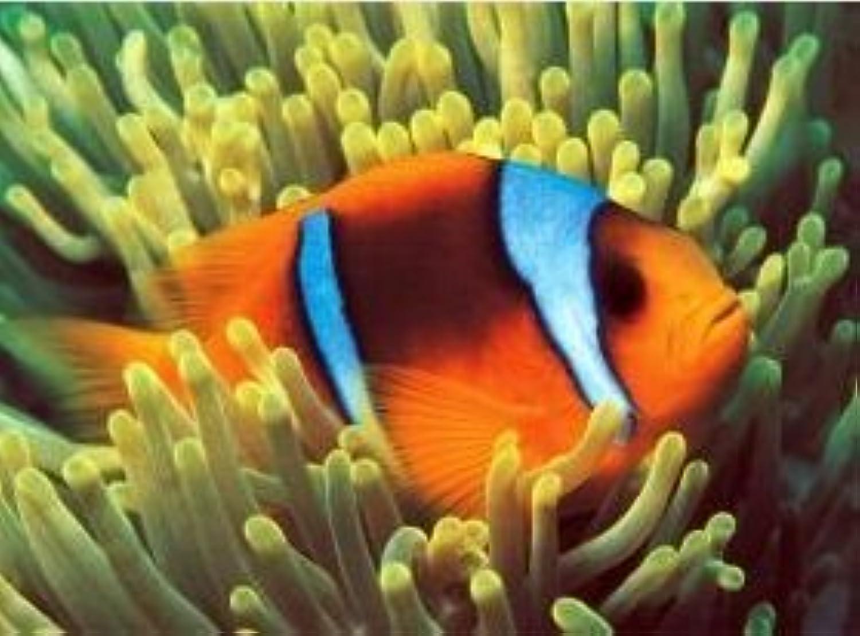las mejores marcas venden barato Clownfish 500 Piece Glow-in-the-Dark Glow-in-the-Dark Glow-in-the-Dark Puzzle by Tomax  Sin impuestos