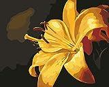 N/O Pintura por números para Adultos DIY Pintura al óleo Kit Flor Amarilla óleo Digital Niños decoración de la Pared del Arte de la Sala Vista 16X20 Pulgadas(con Marco)