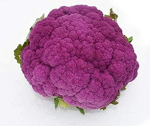 100 Pezzi Cavolfiore Broccolo Viola Semi Semi di ortaggi verdi non OGM per semi di broccoli da...
