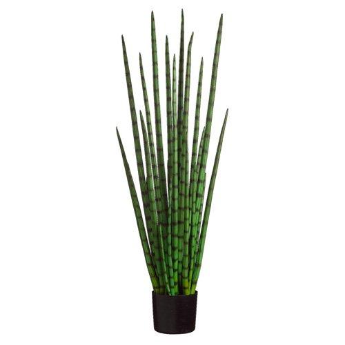 4' Snake Grass in Black Plastic Pot Green (Pack of 2)