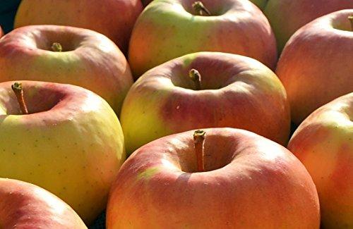 長野県産 生産農家直送りんご 「名月」 中級ランク ご贈答&自家用向き 5〜12玉 約2.7〜3kg入り/箱 収穫&発送は11月中旬頃から順次開始予定!(熟度の進行具合により収穫時期は前後します)