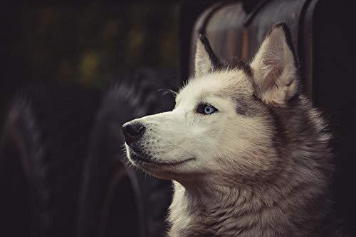 Lsping 3D größtes Puzzle der Welt 1000 Teile Hunde-Husky 50x70cm