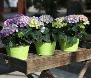 Home&Decorations Bloempot, metaal, neonlook, ronde dubbelzijdige bloempot, ca. 15,5 x 11,5 x 9 cm. groen