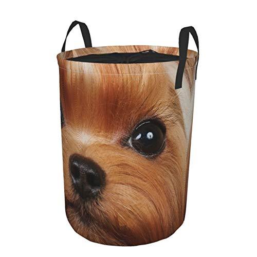 """Plegable Grande Cesto de Ropa Sucia,Cuidado del perro marrón Yorkshire Terrier con largas y preciosas pestañas Wildlife Show Yorkie Pet,Lavandería Cesta de Almacenaje Impermeable con Cordón,14"""" x 19"""""""