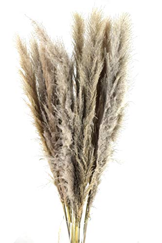 Pampasgras XXL | ein echter Hingucker | 115 cm | 5 Stück | Trockenblumenstrauß | flauschiges Schilfgras | getrocknete Gräser | Trockenblumen naturfarbe | Deko Blumenstrauß