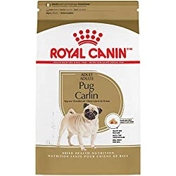 Best Dog Food for Pugs - Royal Canin Breed Health Nutrition Pug Adult Dry Dog Food