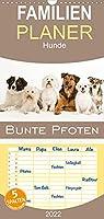 Bunte Pfoten - Familienplaner hoch (Wandkalender 2022 , 21 cm x 45 cm, hoch): Wunderschoene Mischlingshunde im Studio (Monatskalender, 14 Seiten )