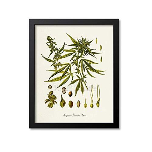 Rac76yd Marihuana Botanical Print Marihuana Botanical Art Print Marihuana Medicinal Drogas Planta Arte pared Hierba Hierba Hierba Hierba Sativa