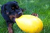 Crazy Egg GELB das unfassbare Spiel Ei für den Hund - 2