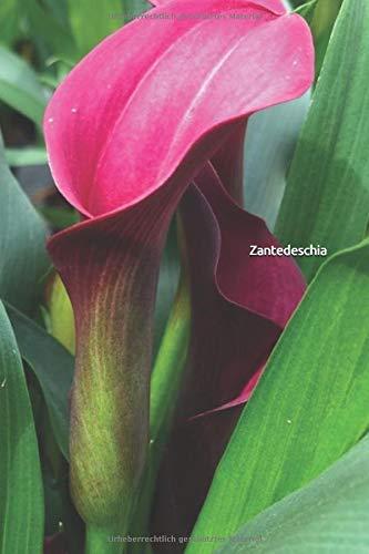 Zantedeschia: Individuell gestaltetes Notizheft, Notizblock, Tagebuch für Männer und Frauen und alle Blumenliebhaber.