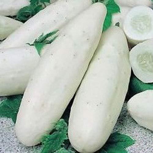 weiße Gurke 15/30/50 x Samen aus Portugal in Bioqualität super frischer Geschmack (15 x Samen)