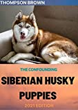 THE CONFOUNDING SIBERIAN HUSKY PUPPIES 2021 EDITION: Everything You Need To Know About Siberian dogs.