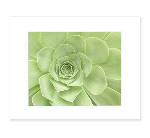 Green Wall Art, Succulent Flower, Bathroom Wall Art, Floral Wall Decor, Botanical Print, Sage Green Picture - 8x10 Matted Photographic Print (not framed), 'Succulent Heart'