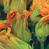 20 Zucchini Seeds, for edible Blossoms - They can be battered and deep-fried, baked, stuffed or used as a...