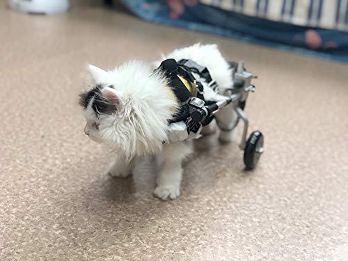 Rimorchio Sedia a Rotelle per la Riabilitazione delle Zampe Posteriori di Cane Gatto e Cuccioli, Carrello per Cani Anziani Feriti Disabili, Carrellino Passeggini per Tutti i Cani