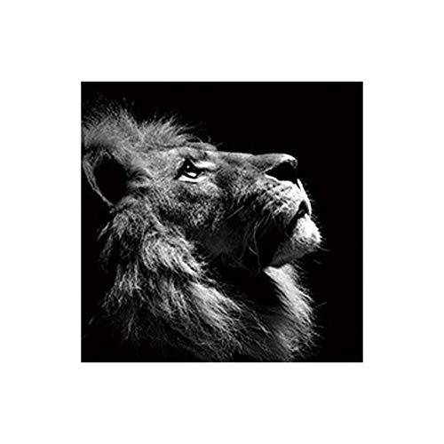 Löwe Tier Kunstdruck leinwand malerei wandbild Wohnzimmer Poster dekorative malerei abstrakte leinwand Kunst malerei rahmenlose malerei Kern 1 40X40 cm
