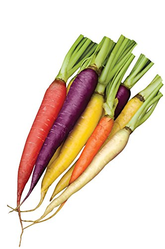 Burpee Kaleidoscope Blend Carrot Seeds 1500 seeds