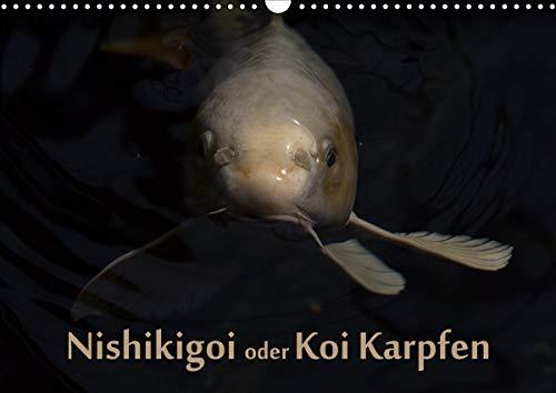 Nishikigoi oder Koi Karpfen (Wandkalender 2021 DIN A3 quer)
