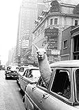 qianyuhe Impresión en Lienzo Llama en un Taxi de la Ciudad de Nueva York Póster con impresión de película artística Decoración de Pared para el hogar 60x90cm