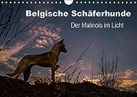 Belgische Schferhunde - Der Malinois im Licht (Wandkalender 2021 DIN A4 quer): Stimmungsvolle Momente mit dem Malinois, dem kurzhaarigen Belgischen Schferhund (Monatskalender, 14 Seiten )