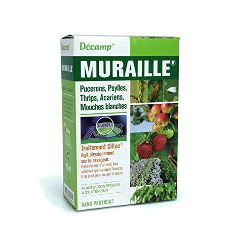 commercial petit thé vert sans pesticide puissant