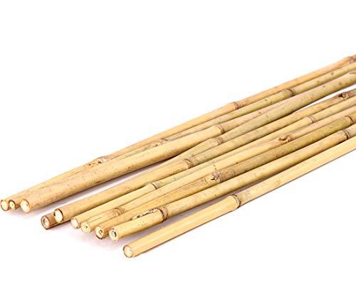 1 Stück Bambusrohr Tonkin 200cm Natur Durch. 2,2 bis 2,4cm - Bambusrohre Rohr aus Bambus