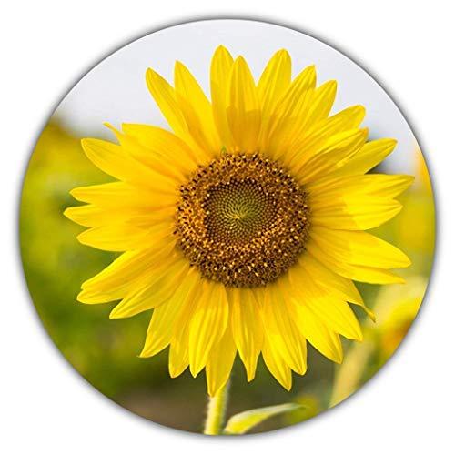 Semi di girasole, helianthus annuus, 50 semi, una pianta affascinante che potrete coltivare voi stessi, colore: giallo, grande