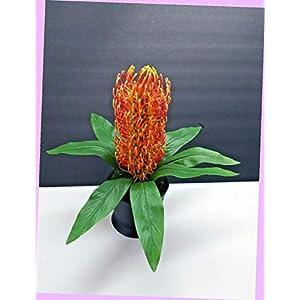 Artificial Needle Protea Flower Arrangement Silk Flowers Bouquet Realistic Flower Arrangements Craft Art Decor Plant for Party Home Wedding Decoration