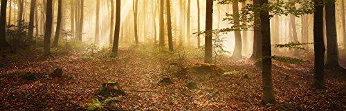 wandmotiv24 Küchenrückwand Wald am Morgen 160 x 50cm (B x H) - Aluminium 3mm Nischenrückwand, Spritzschutz, Fliesenspiegel-Ersatz, Deko Küche M0391