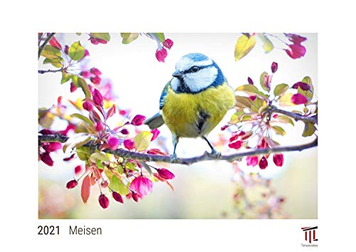Meisen 2021 - White Edition - Timokrates Kalender, Wandkalender, Bildkalender - DIN A3 (42 x 30 cm)