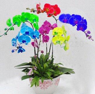 Graines Rare 200PCS Mix Couleur Orchidée Phalaenopsis Fleur Bonsai plantes maison de pot de jardin Papillon graines de Orchid bricolage Jardin Décoration