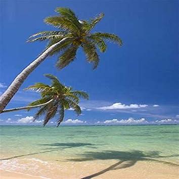 Palm Tree's