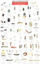 Mac's Field Guide: Bad Garden Bugs of the Northeast/Good Garden Bugs of the Northeast (Mac's Guides (Charts))