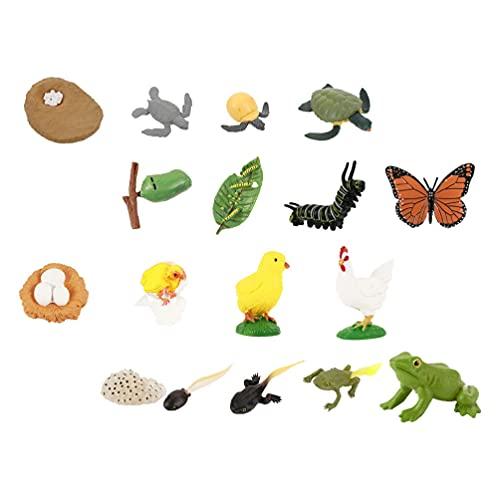 TOYANDONA 4 Conjuntos de Modelos de Ciclo de Vida de Borboletas Tartaruga Sapos Galo Animal Figurinhas Modelos Do Ciclo de Vida de Modelo Animal