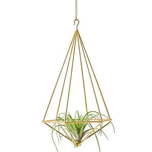 Ybqy Hängender Luft-Pflanzenhalter-moderner geometrischer Pflanzer mit Kette Tillandsia-Behälter Himmeli-Wand-Dekor-Gold (Color : Gold)