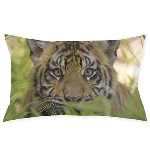 Shanzhi Tiger Face Grass Predator Cub Velvet Oblong Lumbar Plush Throw funda de almohada/funda de cojín decorativa invisible con cremallera diseño de 50 x 30 cm