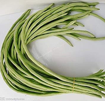 10 PCS longue Bean Vigna unguiculata graines de niébé serpent Semences des haricots Mini Garden longues graines de haricots Facile à cultiver 1